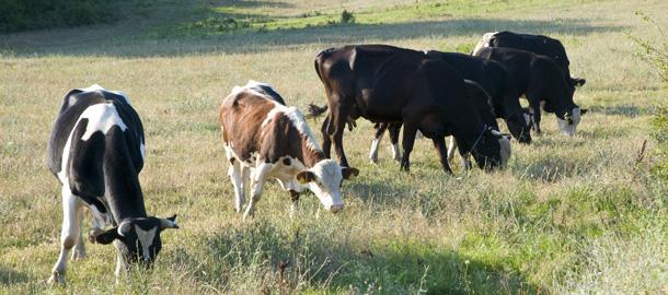Странджа – единственото място в България,  където могат да се видят толкова красиви домашни животни
